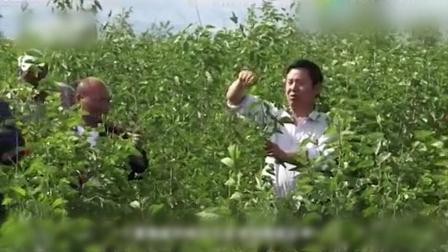 鄂尔多斯市一起种田生态有限公司宣传片