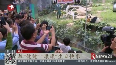 澳门:大熊猫双胞胎喜迎一周岁生日 东方新闻 20170626 高清版