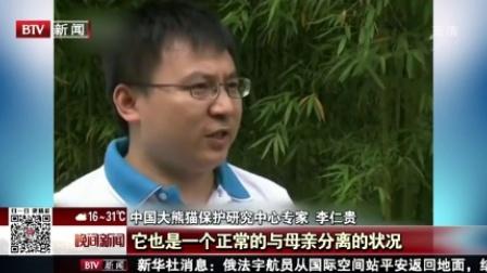 """晚间新闻报道20170603新闻万象·真相 网传旅美大熊猫被""""虐待""""专家辟谣 高清"""
