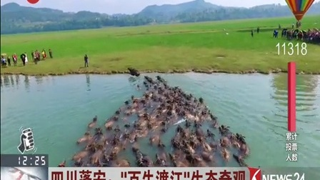 """四川蓬安:""""百牛渡江""""生态奇观 东方大头条 170429"""