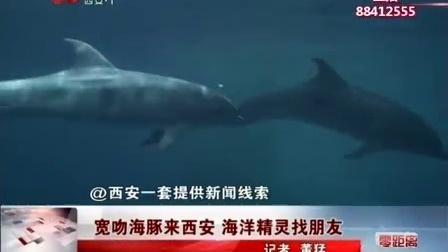 宽吻海豚来西安 海洋精灵找朋友 午间零距离 170519