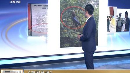 《南国早报》 六旬阿婆爬树看比赛 真的! 晨光新视界 171025