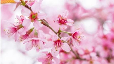 为你读诗 首届世界诗歌日音乐会主题曲:春晓 首届世界诗歌日音乐会主题曲:春晓