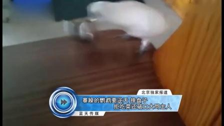 蓝天娱乐快报 2016 7月 暴躁的鹦鹉要逆天 摔盘子拒吃菜还破口大骂主人 160708