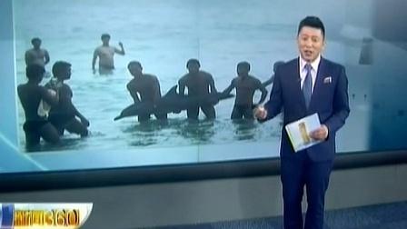 放开那头海豚!三亚海豚搁浅 无知游客抓其合影致呛水死亡