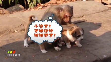 【神马看世界】当动物们融入到人类生活中后...(二)