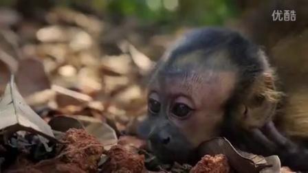 法国巴西合拍3D片《亚马逊萌猴奇遇记》加长版宣传片