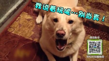 番外篇宠物卖萌讨欢心 71