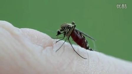 【绝对震撼】【拍客】千万别眨眼!超近距离拍摄一只蚊子吸血的全过程【时光出品】