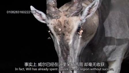 1021 隐蔽照相机拍摄到了罕见的非洲动物