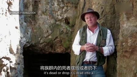 0706 科学家发现人类新祖先 纳莱迪人