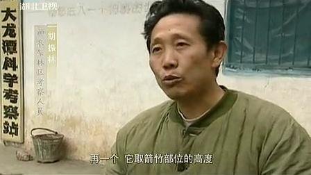 中国NO.1 2013 神农架野人之谜