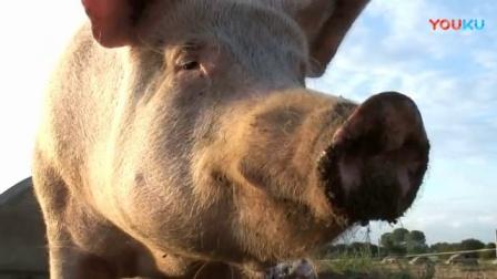 獵奇 第十九集 养猪场的狙击手保安