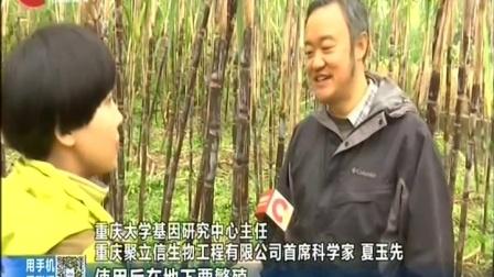 """破解昆虫病理""""基因密码""""""""重庆造""""生物农药实现量产 重庆新闻联播 20180102"""