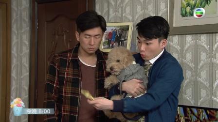 TVB【愛.回家之開心速遞】第241集預告 樹根被恐嚇!?