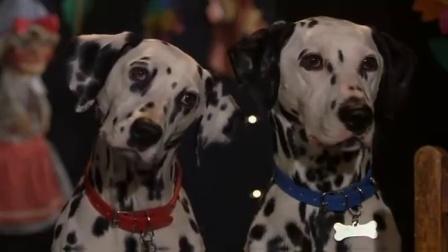 《102真狗》  白狗看木偶戏 遇斑点冲上舞台狂咬