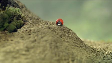 昆虫总动员 红蚁军团穷追不舍 黑蚁惊险过马路