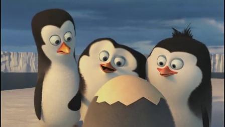 马达加斯加的企鹅 海豹口中勇救蛋 激萌菜鸟破壳而出