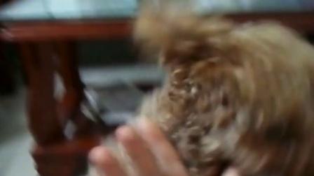 史上最殘忍的虐狗,但聰明的泰迪犬拼死抵抗