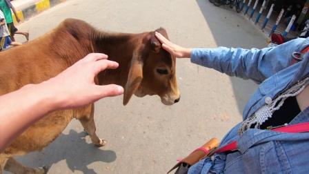 在瓦拉纳西的一天感受奇幻的印度!