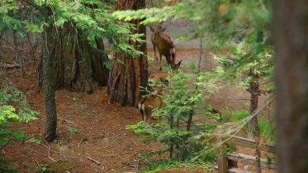 走近约书亚树&优胜美地国家公园