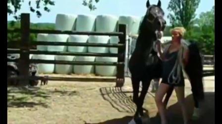 主人带马去找女朋友, 公马竟嫌弃母马长得丑?