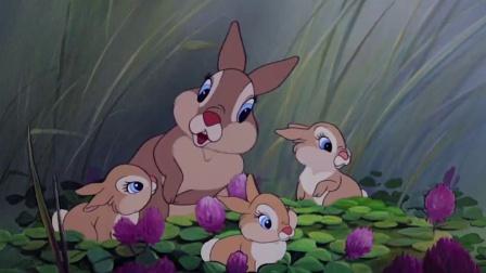 《小鹿斑比》  初出茅庐学吃草 邂逅同伴被逗乐