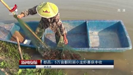 都昌:5万亩鄱阳湖小龙虾喜获丰收 新闻夜航 180514 高清