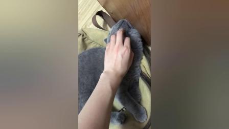 搞笑视频:好可爱的猫咪啊,我能认识它们的主人吗