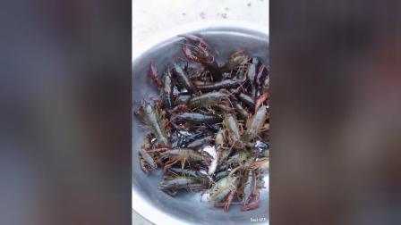 散养小龙虾