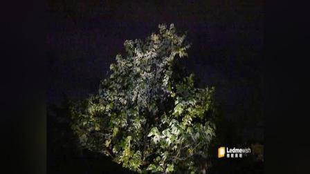 广州朗文光电 水面纹照射植物树冠 单棵植物 缔朗照明 户外效果灯具