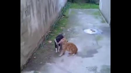 惊天地泣鬼神! 5大猫跟猫打架搞笑视频