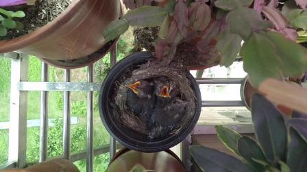 5•30鸟儿在成长.MOV