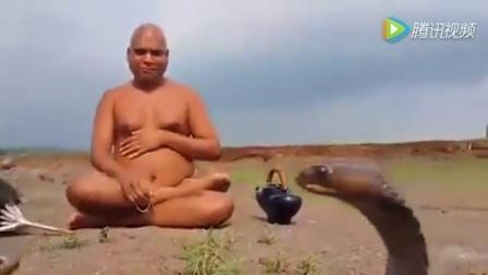 两条眼镜王蛇在打架, 印度牛人近距离坐在观看, 其他人远处跪拜