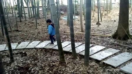 小网红:笑笑鸟漫步在小竹林中