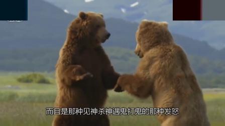 别逗我! 战斗民族真能打过熊吗, 棕熊真的那么弱吗? 看完就知道了