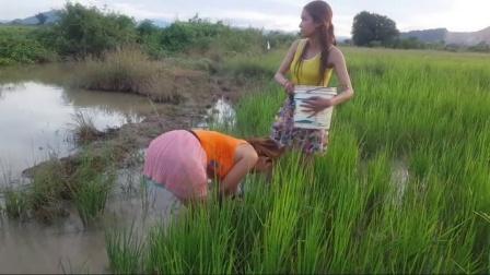 柬埔寨媳妇捕鱼, 只为捕得大鱼为丈夫做下酒菜, 贤惠啊