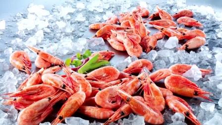 看多了加拿大北极虾,来看看格陵兰北极虾,从捕捞煮熟到加工运输