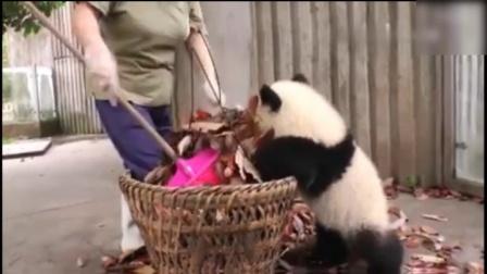 超级调皮的熊猫 动作好萌