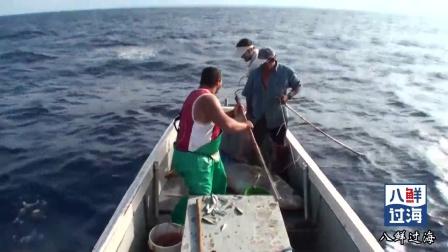 英国人用竹竿钓黄鳍金枪鱼,钓到的小鱼做诱饵捕金枪鱼,真是会玩