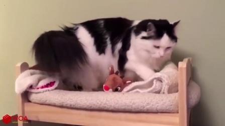 搞笑的猫咪, 睡个觉都要抱着娃娃一起睡觉, 你这也太娇气了吧!