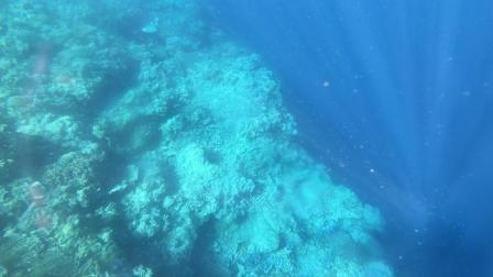 巴里卡萨浮潜2