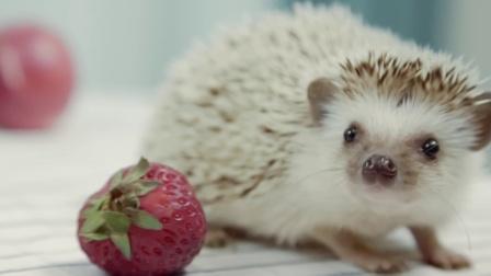 """夏天流行吃""""胖子""""!最炫酷的吃水果方法了解一下?"""