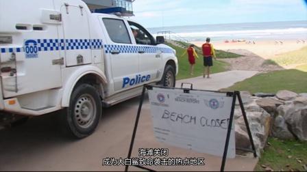 """我们的世界:澳大利亚的鲨鱼威胁 惊险!澳17岁冲浪少年上演""""鲨口逃生"""""""