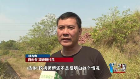 考古发现:义乌发现15件完整恐龙蛋化石 新闻深
