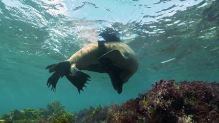 海狮奇怪行为多怕是到SHOW TIME,雌雄海狮上演完美表演