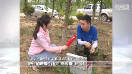 """野生麋鹿不慎掉入水渠 救助队""""施妙计""""助它脱险(视频)"""