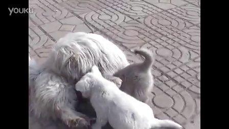 【拍客】狗狗母子3口爱意浓浓
