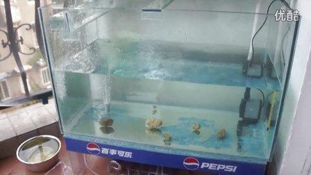 DIY鱼缸,上滤 自增氧
