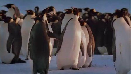 帝企鹅日记(英文版)